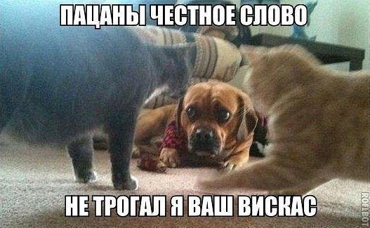 http://fotovideoforum.ru/small/yumor-aneki-i-vse-smeshnoe-v-kartinkax--12-6fb80i_52071.jpg